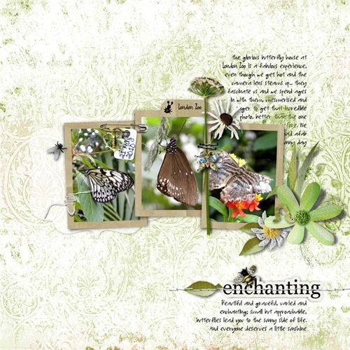 Enchanting-web