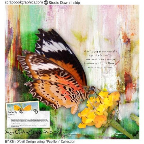 2papillon-marie-claire
