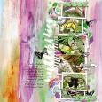 27 butterflies