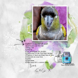parrot to-do list