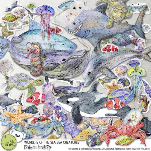 Dinskip_WondersOfTheSea_SeaCreatures