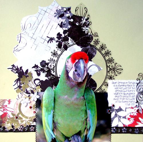 Parrot_700x700