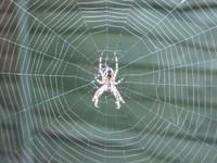Spider_blog_1